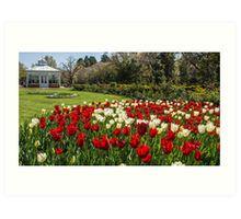 Tulips Short Lived Art Print