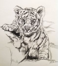 How To Draw A Baby Tiger | ourimgs.com - The Hippest Galleries!