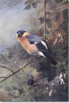 Wildlife Paintings of Birds