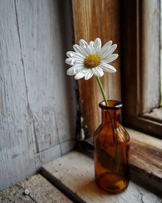 by Jaana Huotari Still Life Photography, Nature Photography, Daisy Love, Still Life Art, Vase, Gerbera, Flower Wallpaper, Flower Photos, Aesthetic Pictures