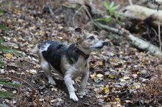 Snidley Moor Wood, Cheshire, Nov 2013