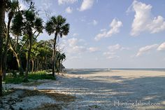 Hunting Island is a hauntingly beautiful location for a stopover.  Located near Beaufort, there is a wonderful lightful, tall pine trees that grow right up to the water, and plenty of lovely and unusual driftwood.
