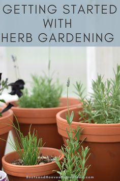 Learn the basics of starting your own herb garden at home. The best tips for getting started with herb gardening. #herbs #garden #gardeningforbeginners Potager Garden, Herb Gardening, Organic Gardening, Herbs Garden, Dish Garden, Indoor Gardening, Healing Herbs, Medicinal Herbs, Herb Garden Design