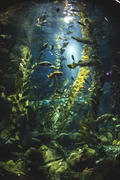 tell your friends — isatoutside: fish by the fisheye (first explored. Underwater Photography, Nature Photography, September Wallpaper, Beautiful Places, Beautiful Pictures, Underwater Painting, Nature Aesthetic, Fantasy Landscape, Ocean Life