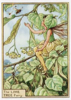 Lime Tree fleur fée Vintage Print, c.1950 Cicely Mary Barker livre plaque Illustration