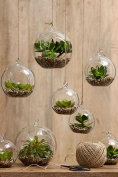 Phenomenal Indoor Herb Gardens Terrarium are a simple and cost effective way to breathe new life into a room and add greenery.Terrarium are a simple and cost effective way to breathe new life into a room and add greenery. Hanging Terrarium, Moss Terrarium, Terrarium Ideas, Planter Ideas, Hanging Glass Planters, Small Terrarium, Terrarium Wedding, Air Plant Terrarium, Herb Planters