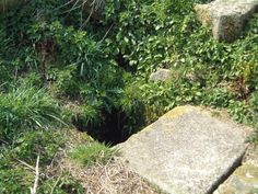 Site Name: Tregaminion Holy Well   Country: England County: Cornwall Type: Holy Well or Sacred Spring