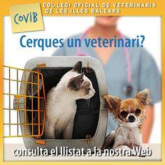 Aquí teniu l'enllaç amb totes les clíniques veterinàries de les Illes Balears, http://www.covib.org/colegio-centro-veterinario.php?lang=ca #veterinarisib #COVIB #mascotes #mascotas