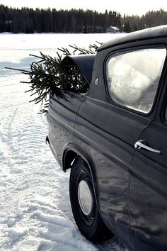 Yule style!! Noel or Christmas - Bring home a real tree for a treat during the Holiday Season!