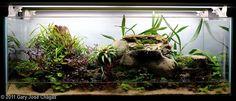 2011 AGA Aquascaping Contest - Entry #389