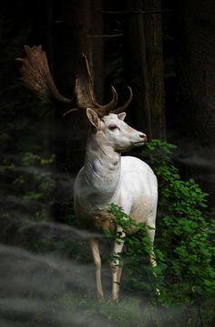 Stunning Deer - www.dreamscopehunting.com