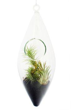 Terariu in Forma de Romb Aerium #terariu #romb #plante #natura #design #aerium #cadouri #ideicadouri