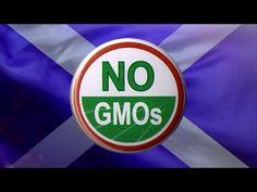 Scotland Issues GM Crop Ban (#Winning!)