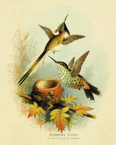 Hummingbirds Vintage Bird Print Nature print