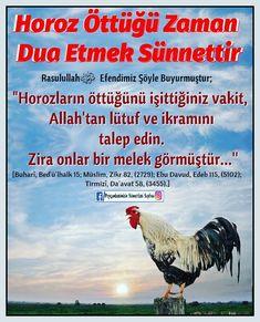 Karma, Allah, Pray, Faith, Education, Life, Animals, Knowledge, Animales