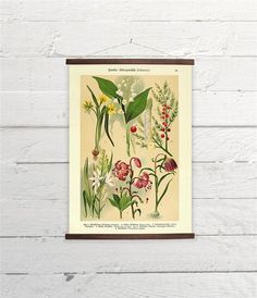 Botanical Lilies Flowers Various Plants Lily Of The Valley Asparagus Fritillaria Canvas Poster Print Wooden Wall Chart Size A3 16x11