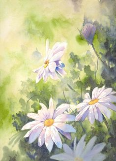 Daisy watercolor ♥