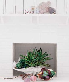 As Planters  While your fireplace is on hiatus, take a shell (the largest one shown is a resin replica) and fill it with succulents planted in the appropriate kind of potting soil. Water sparingly and only when the soil is dry