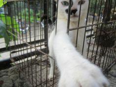 OurCat2 Ferret, Animals, Animais, Animales, Animaux, Ferrets, Animal, Dieren, European Polecat