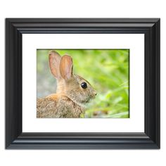 Bunny at Bombay Hook  Traditional Wildlife Photography Wall Art Prints and Limited Edition Fine Art Prints by nature and landscape photographer Melissa Fague.   Prints are available at: www.pipafineart.com.   We would love for you to follow us at: @pipafineart   #walldecor #wallhanging #homeaccessories #homedecore #wallart #photographyart #photographyartwork #photographywallart #Animalart #wildlifewallart #wildanimals #artwildlife #bunny #rabbit #wildrabbit