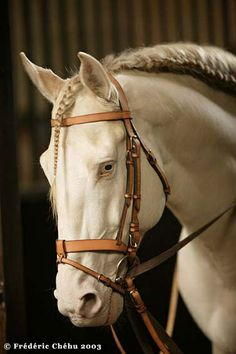 bridle by hermes