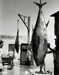 by Herbert List, Favignana, Sicilia 1954 Herbert List, Modern Photography, Vintage Photography, Street Photography, Black And White Photography, Old Photos, Vintage Photos, Harper's Bazaar, Gordon Parks