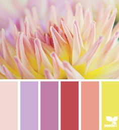 Radiant orchid color palette inspiration from Design Seeds. designseeds.com
