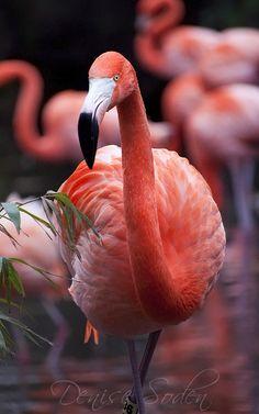 Pink Perfection by DeniseSoden on DeviantArt