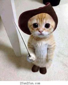 Hello, my name is Puss in Boots you killed my father, prepare to die