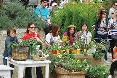 alaçatı ot festivali - Alaçatı Sosyal