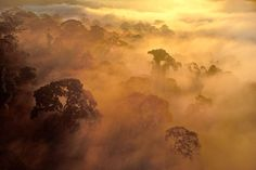 Photo by @FransLanting // I spent weeks inside Borneo's tropical rain forest on assignment for @NatGeo to document its intricate natural history. One morning I took a helicopter up for an aerial perspective. When we rose above the canopy, my view expanded from single trees to the forest as a whole. I saw morning mist wafting through the treetops and envisioned the collective exhalation of these trees as the breath of a living planet.Trees are responsible for the air we breathe—what they…