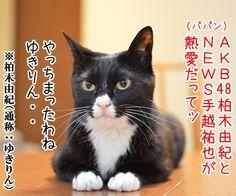 AKB柏木とNEWS手越の熱愛報道 - http://iyaiyahajimeru.jp/cat/archives/54486