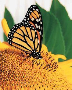 """""""Pretty Butterfly"""""""