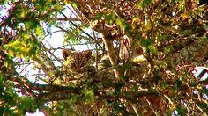 (2) Twitter National Geographic Wild, African Safari, Giraffe, Live, Twitter, Animals, Felt Giraffe, Animales, Animaux