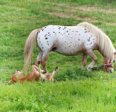Visit the post for more. Cow, Horses, Nature, Animals, Naturaleza, Animales, Animaux, Cattle, Animal