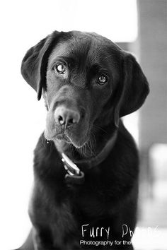 That is why I love Labs!