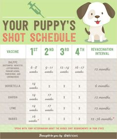 Infographic A Complete List Of All The Vaccinations Your Puppy Needs And When It Them