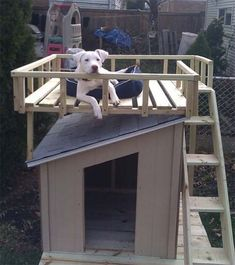 dog-house-with-roof-top Build A Dog House, Silly Dogs, Dog Houses, Our Kids, Puppy Love, Dog Stuff, Deck, Madeira, Patio