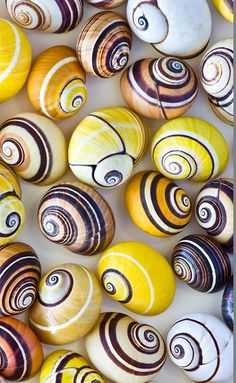 Cuban Tree #Snails #pattern