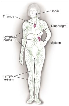 Non-Hodgkin Lymphoma | Resources | National Cancer Institute
