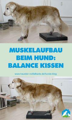 Muskelaufbau beim Hund mit dem Balance Kissen! Jetzt im #Haustier #Notfallkarte #Hunde #Blog