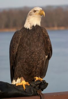 Wabasha, MN - Most people come to the National Eagle Center to watch eagles from the  two-story windows and the 25-foot-high, outdoor observation platform. But be sure to leave time for the programs about resident eagles, too. Admission charged.
