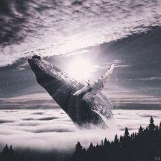 Картинки по запросу киты умирают в лужах бензина