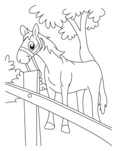 bay horse coloring pages - photo#35