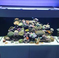 #AquariumWest  Premium-Aquariumbau www.aquariumwest.de #Meerwasseraquariumpodcast  # MarkusMahl  #aquariummuenchen #meerwasseraquarium #aquariumwartung #designaquarium #aquariumbau #meerwasseraquaristik #reeftank #reefbuilders #reefdesign #axperto