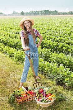 https://www.istockphoto.com/dk/photo/young-farm-girl-harvesting-fresh-produce-vegetables-from-field-gm175527571-20919525