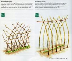 Woven and Top-tied stick trellis for peas.