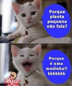 Oh my goodness hahahaha Cat Memes, Funny Memes, Jokes, Gato Do Face, 4 Panel Life, Whatsapp Messenger, Good Humor, Try Not To Laugh, Pranks