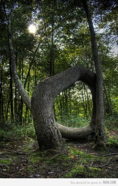 Funny pictures about Epic tree is epic. Oh, and cool pics about Epic tree is epic. Also, Epic tree is epic photos. Weird Trees, The Meta Picture, Unique Trees, Trees Beautiful, Old Trees, Nature Tree, Tree Forest, Tree Art, Tree Of Life