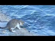 Кот - хитрец!!! Ловит рыбу на приманку!!! - YouTube